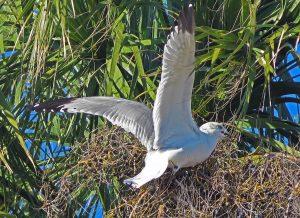 Bird-watching-on-Fripp