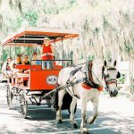 Fripp Island Carriage Rides