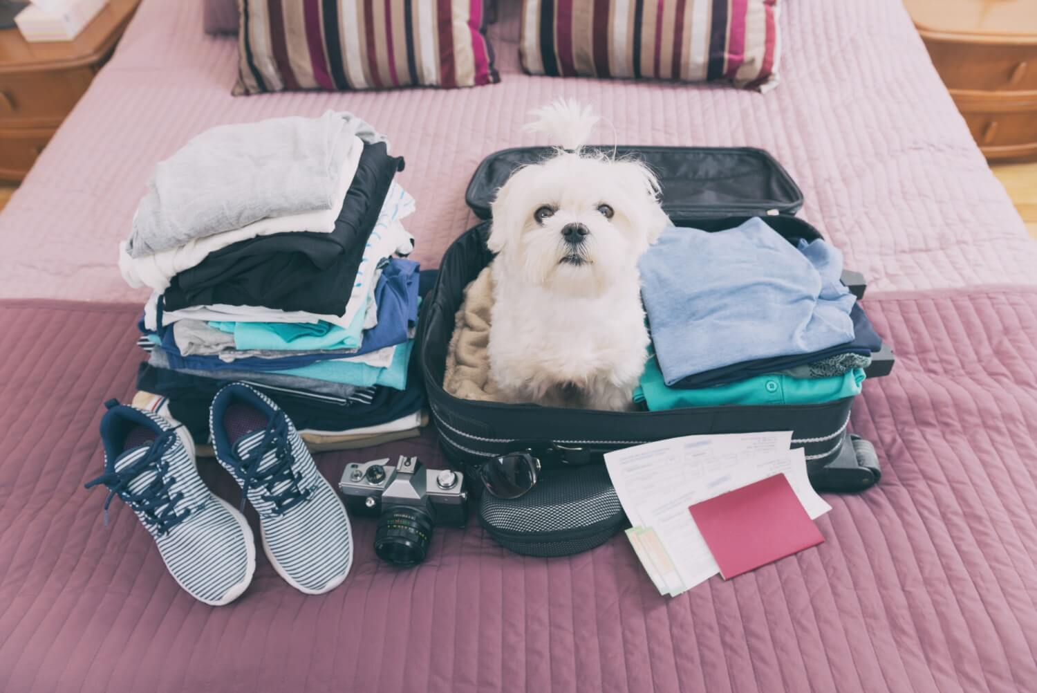 Pack Your Pooch on vacation