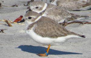 Shore-bird