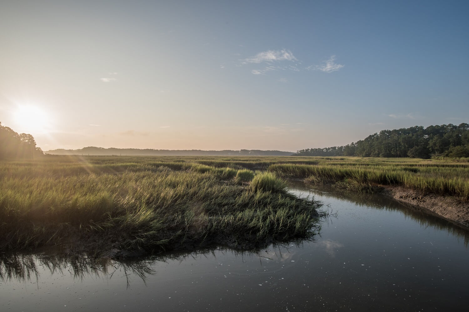 Tidal Marsh in South Carolina