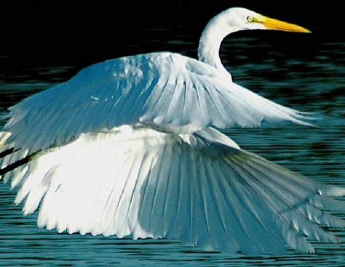 White Heron Hero Image