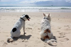 dog-on-beach-fripp-island