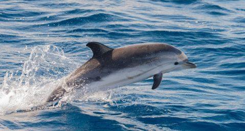 Dolphin spotting on Fripp Island